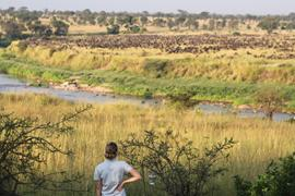 The migration has arrived at Singita Lamai!